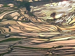 Risterrasser i Yuanyang, soluppgång