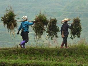 Två kvinnor bär i bergen nära Zhaoxing, Guizhou