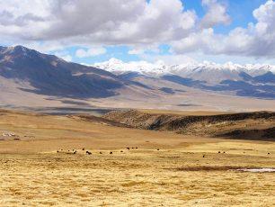 Vandring i Tibet bland nomader